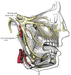 Anatomy of Trigeminal Nerve   CCube Homeopathy